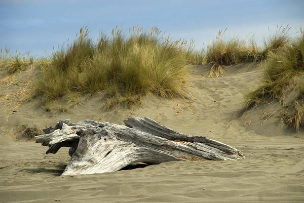 Wood Art Print featuring the photograph Driftwood by Jessica Wakefield