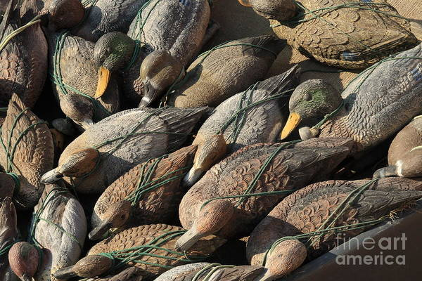 Ducks Art Print featuring the photograph Duck Decoys On Burano by Michael Henderson
