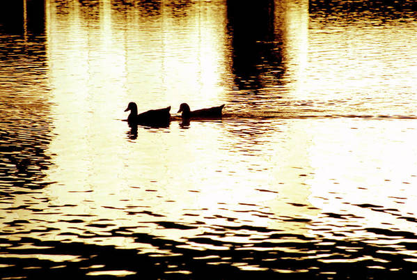 Silhouettes Art Print featuring the photograph Ducks On Pond 1 by Steve Ohlsen
