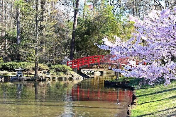 Duke Gardens Bridge Art Print featuring the photograph Duke Garden Spring Bridge by Scotty Alston
