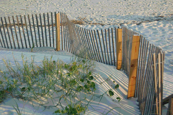 Sea Fence Art Print featuring the photograph Dune Fence by Suzanne Gaff