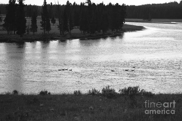 Wildlife Art Print featuring the photograph Dusk At The Yellowstone River by Susan Chandler