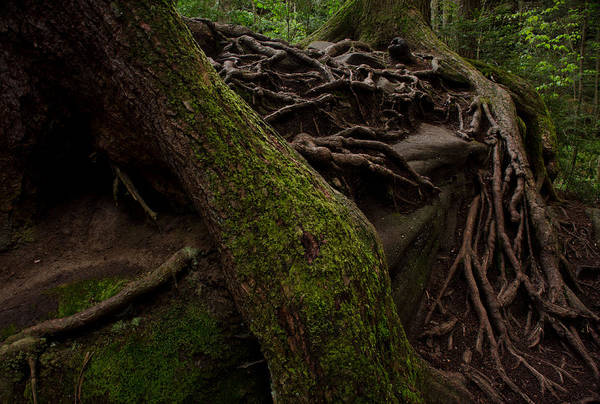 Roots Art Print featuring the photograph Earth Day 2012 by Maria Suhr