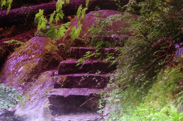 Stairs Art Print featuring the photograph Easy Steps by Jeff Swan