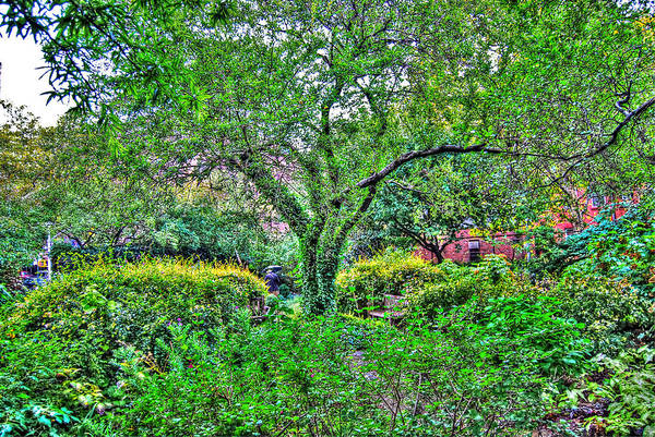 Greenwich Village Art Print featuring the photograph Elderly Man At St. Luke's Garden by Randy Aveille