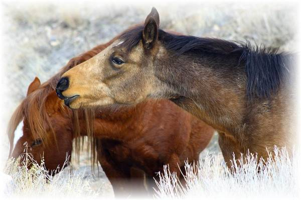Wild Art Print featuring the photograph Enchanting by Gene Praag