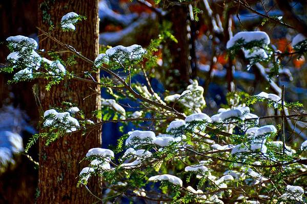 Forest Art Print featuring the photograph Enlightened Winter by Dale Chapel