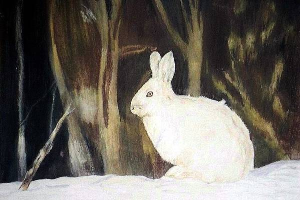 Snowshoe Hare Art Print featuring the painting Evening Snow by Debra Sandstrom