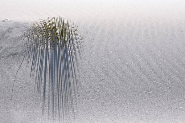 White Sands National Monument Art Print featuring the photograph Fading Footprints by Brian M Lumley