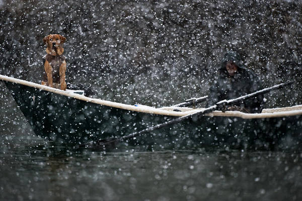 Dog Art Print featuring the photograph Faith In Snow Ka653 by Yoshiki Nakamura