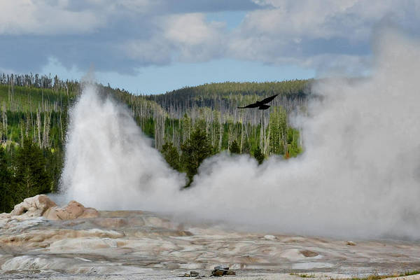 Old Faithful Geyser Art Print featuring the photograph Falcon Over Old Faithful - Geyser Yellowstone National Park Wy Usa by Christine Till