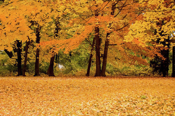 Autumn Art Print featuring the photograph Fall In Lindstrom by Chip Jones