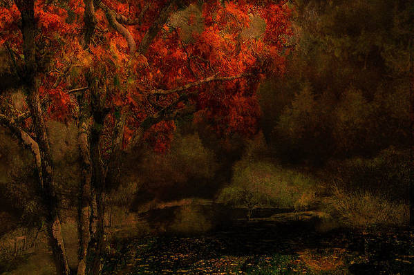 Fall Art Print featuring the photograph Fall Woods by Jeff Burgess