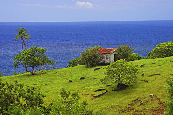 House Art Print featuring the photograph Farmhouse-st Lucia by Chester Williams