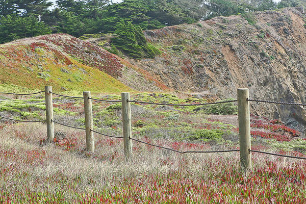Fence Art Print featuring the photograph Fence Fort Fungston by Liz Santie