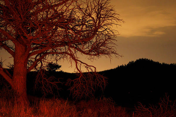 Landscape Art Print featuring the photograph Fire Tree by Jeffery Ball