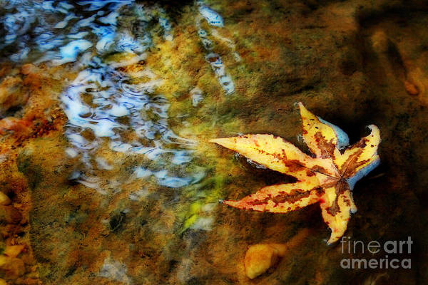 Leaf Print featuring the photograph First Sign Of Fall by Sari Sauls