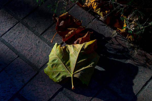 Fall Art Print featuring the photograph First To Fall by Derek Dean