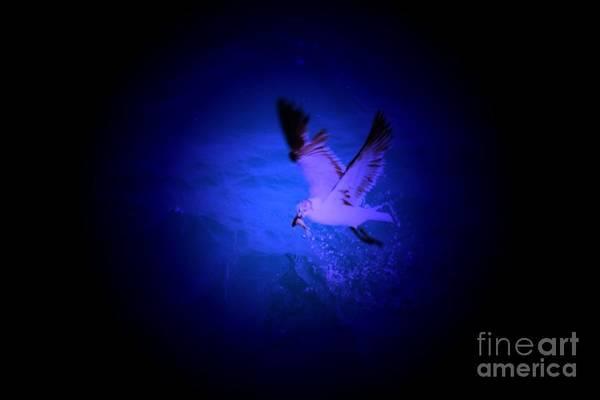 Birds Art Print featuring the digital art Fish Groceries by Rana Adamchick