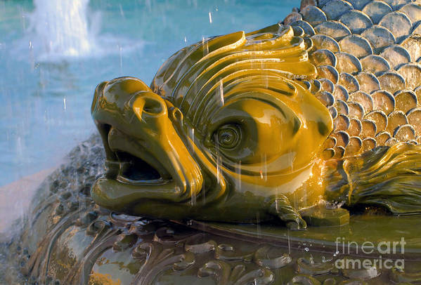 Fish Art Print featuring the photograph Fish Out Of Water by David Lee Thompson