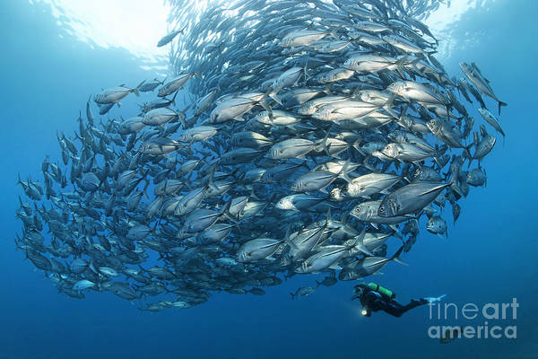 Animal Kingdom Art Print featuring the photograph Fish Watch by Norbert Probst