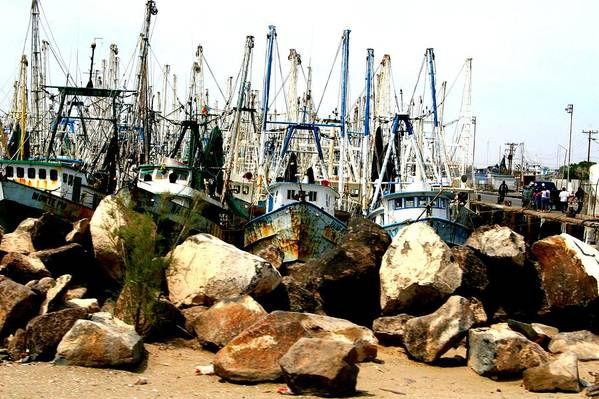 Fishing Art Print featuring the photograph Fishing Boats by Bob Gardner