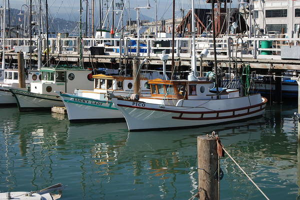 Fishing Art Print featuring the photograph Fishing Boats In San Francisco by Gene Sizemore