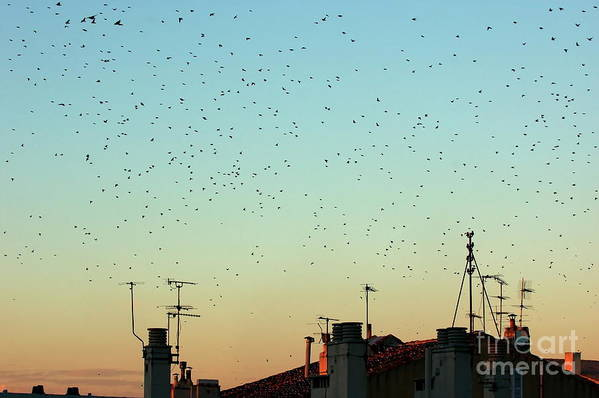 Animal Art Print featuring the photograph Flock Of Swallows Flying Over Rooftops At Sunset During Fall by Sami Sarkis