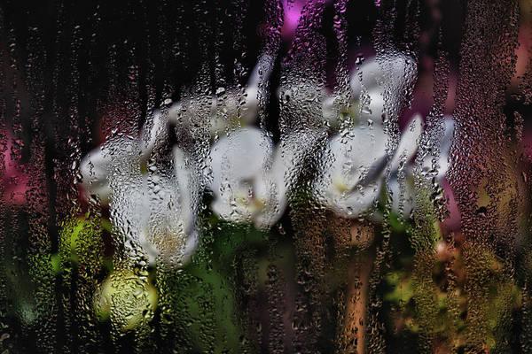 Flowers Art Print featuring the photograph Flower Shop Window 3 by Robert Ullmann