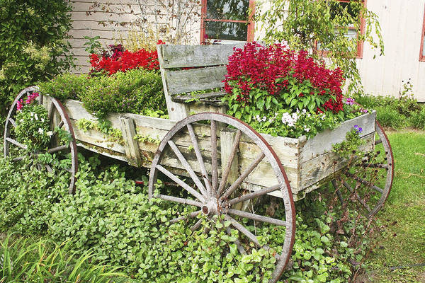 Wagon Art Print featuring the photograph Flower Wagon by Margie Wildblood