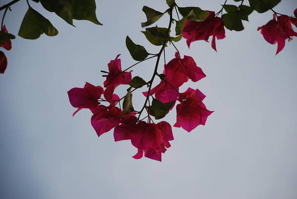 Flowers Art Print featuring the photograph Flowers In The Sky by Rob Hans