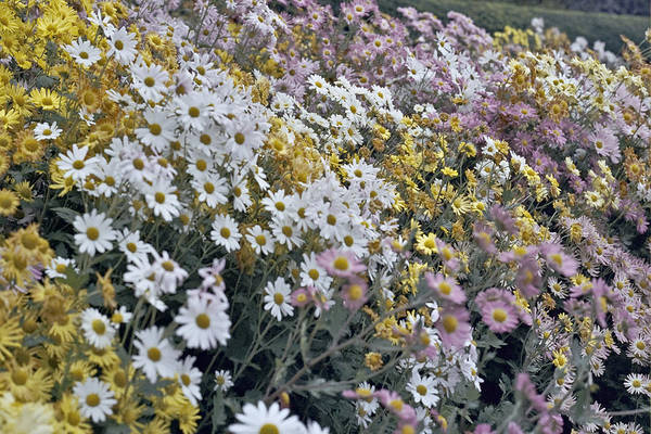Flowers In Fall Art Print featuring the photograph Flowers by Wes Shinn