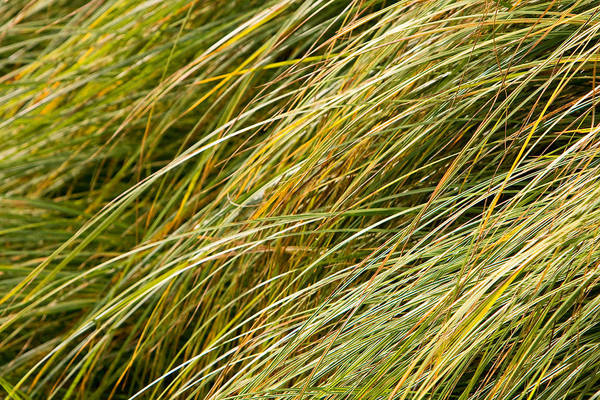 Abstract Art Print featuring the photograph Flowing Green Grass Abstract by James BO Insogna