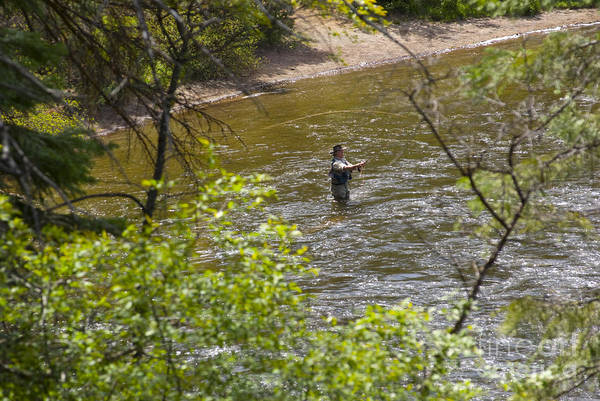Fishing Art Print featuring the photograph Fly Fishing by Louise Magno