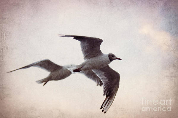 Gull Art Print featuring the photograph Flying by Angela Doelling AD DESIGN Photo and PhotoArt