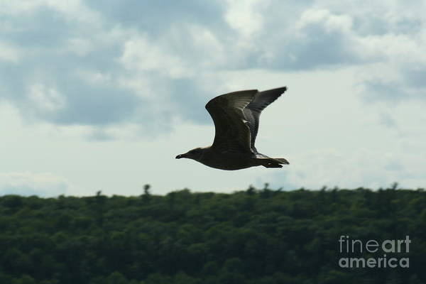 Ephraim Art Print featuring the photograph Flying Ephraim Wi by Tommy Anderson