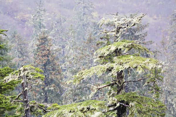 Alaska Art Print featuring the photograph Foggy Tongass Rain Forest by Eggers Photography