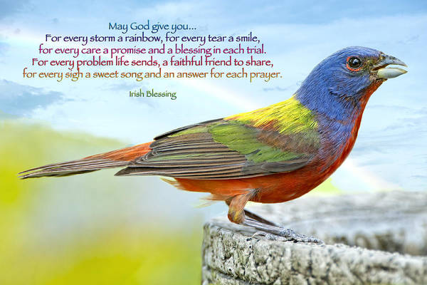 Painted Bunting Art Print featuring the photograph For Every Storm A Rainbow Irish Blessing by Bonnie Barry