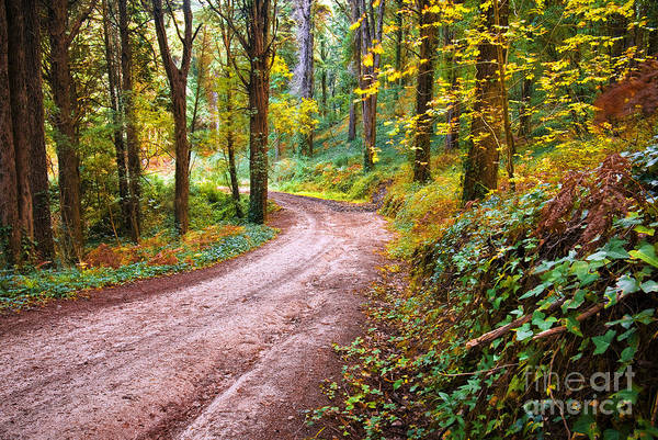 Autumn Art Print featuring the photograph Forest Footpath by Carlos Caetano