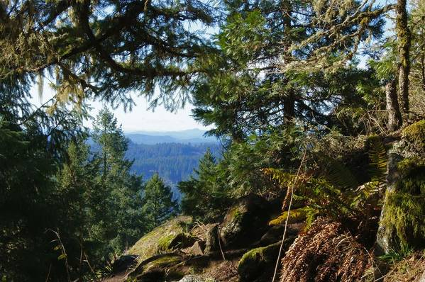 Forest Art Print featuring the photograph Forest Lookout by Chris Pitzer