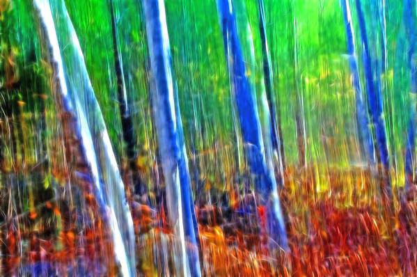 Forest Art Print featuring the photograph Forest Magic by Bill Morgenstern