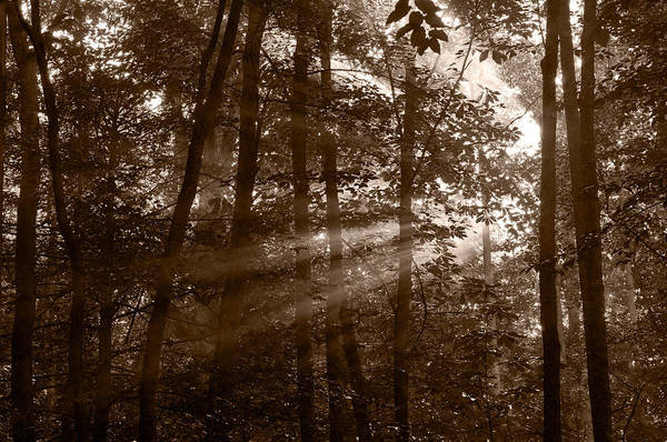 Black Art Print featuring the photograph Forest Mist B And W by Steve Gadomski