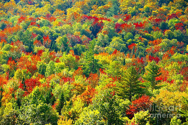 Forest Art Print featuring the photograph Forest Of Color by David Lee Thompson