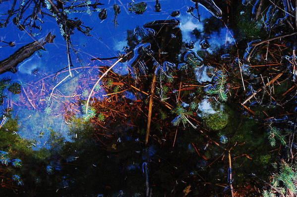 Forest Puddle Art Print featuring the photograph Forest Puddle by Rebecca Fulweiler