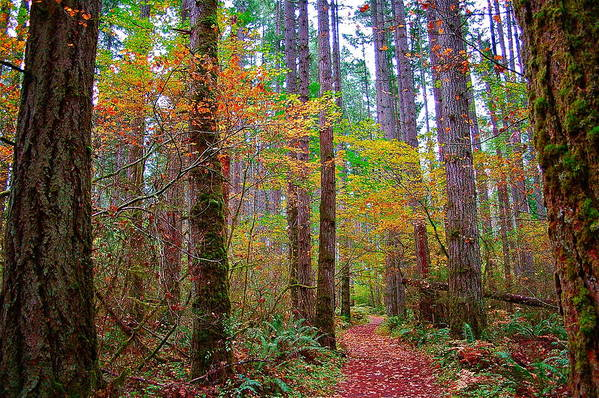 Nature Art Print featuring the photograph Forest Road by Mark Lemon