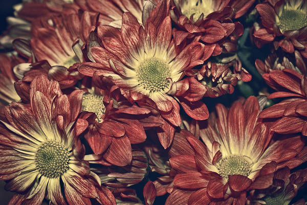 Daisies Art Print featuring the photograph Foulee De Petales - 04b by Variance Collections