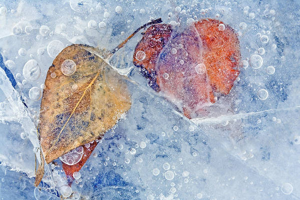 Ice Art Print featuring the photograph Fractured Seasons by Mike Dawson