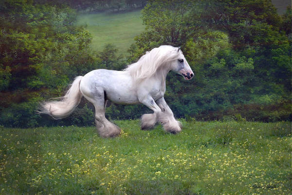 Horse Art Print featuring the photograph Free Billy by Fran J Scott