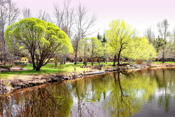 Devonian Garden Art Print featuring the photograph Fresh Spring Trees by Carol Cottrell