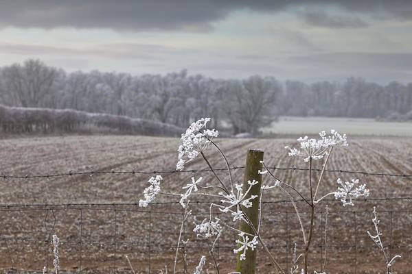 Field Print featuring the photograph Frost-covered Rural Field Cumbria by John Short